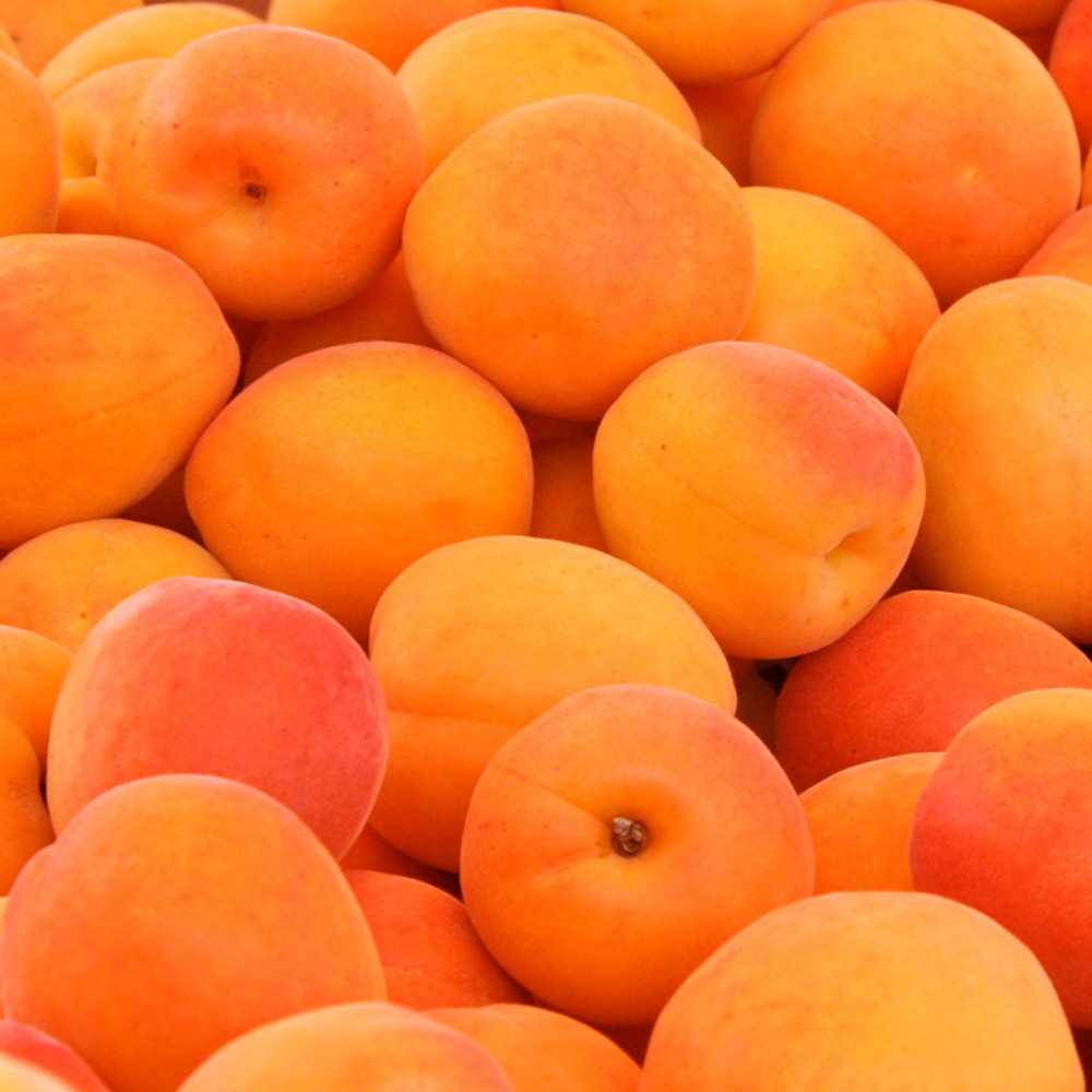 apricots-bright-as-sunshine