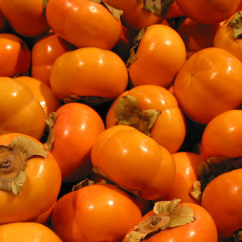 persimmons cropped